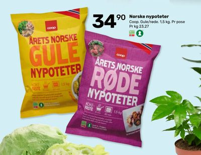Norske nypoteter